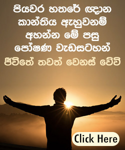 Read Sinhala Bible Jesus Is Always With You